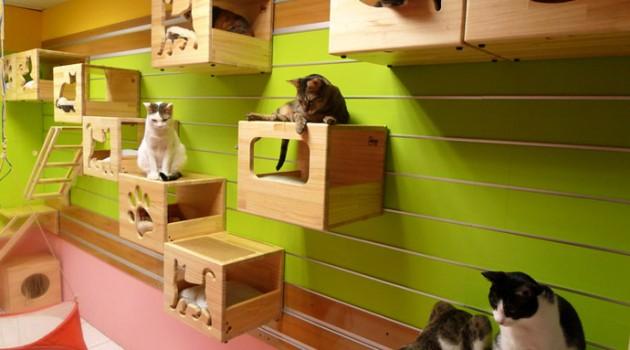 Catswall – A Modular Cat Climbing Wall Perfect for You Pet