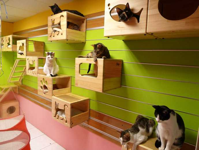 Catswall A Modular Cat Climbing Wall Perfect For You Pet