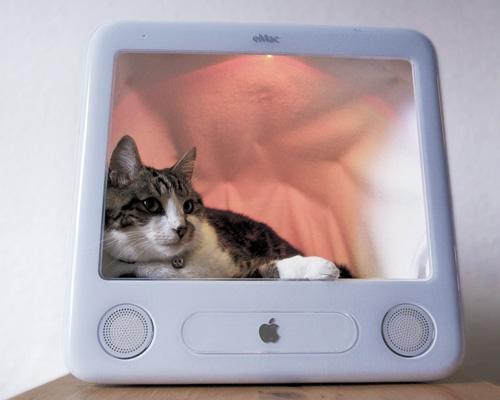 25 Diy Pet Bed Ideas