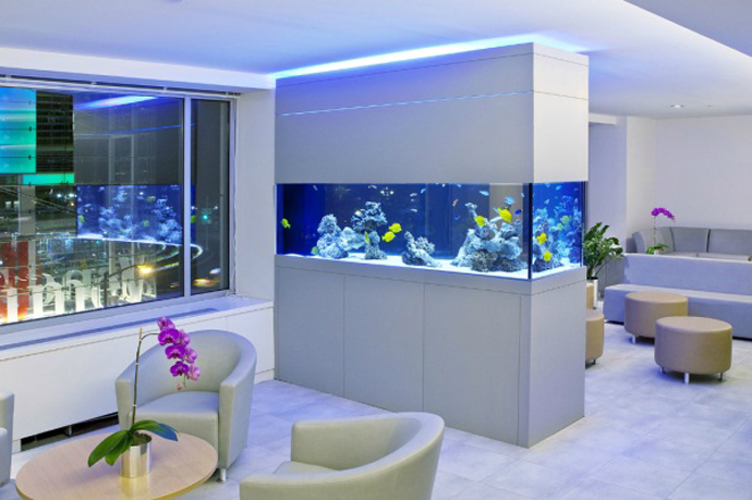 Cool Aquariums for Your Home
