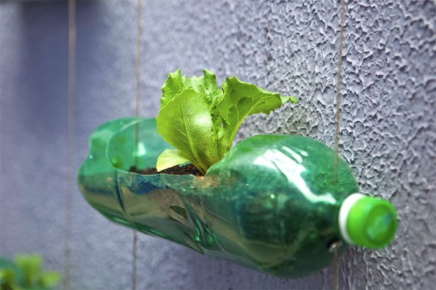DIY: Creation of a modern garden with upcycling plastic bottles