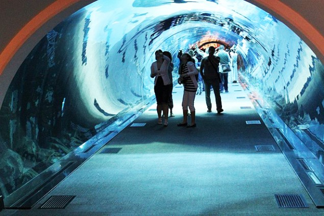Underwater Zoo And Aquarium In The World's Largest Shopping Mall @ Dubai