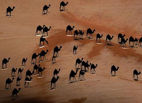25 Amazing Examples Of Shadow Art