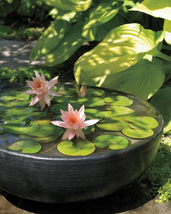 30 beautiful backyard ponds and water garden ideas for Aquatic pond plants