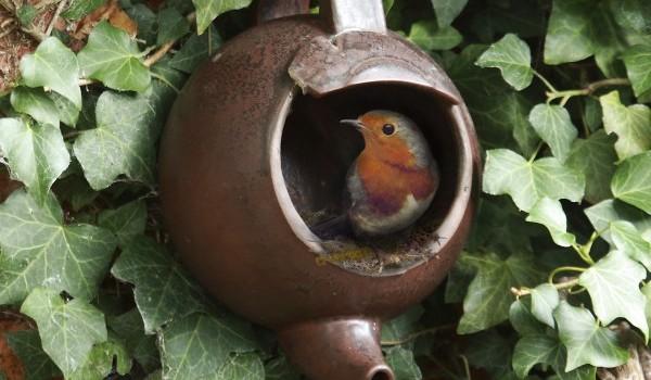 10 Delightful DIY Birdhouses