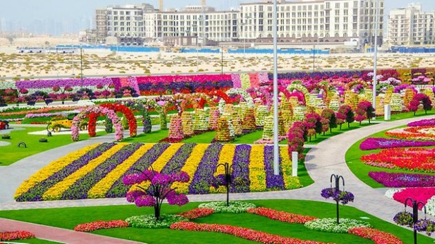 Dubai Miracle Garden The most Attractive Garden in the World