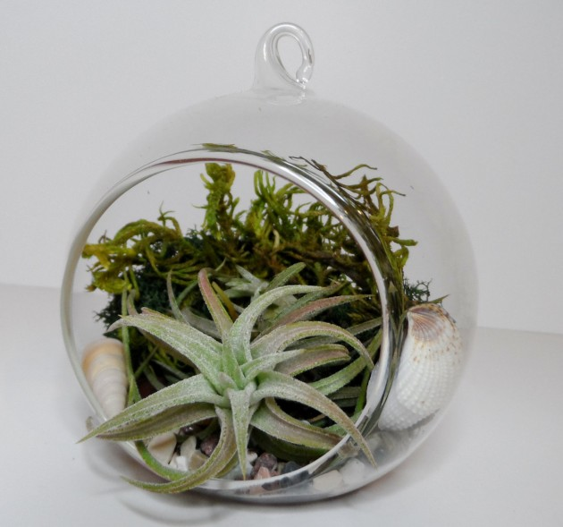Decorate Your Home with Charming Little Terrariums