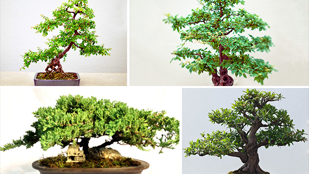 20 Enchanting Miniature Bonsai Decoration Ideas