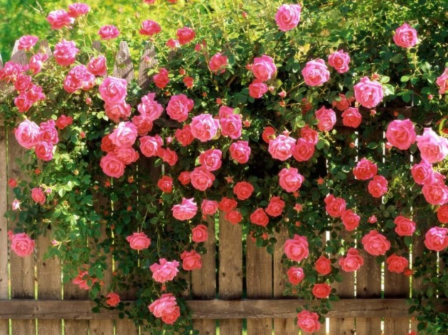 Flowers on The Fence- Beautiful Addition to Every Yard