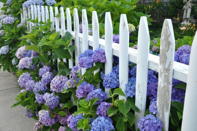 Flowers on The Fence  Beautiful Addition to Every Yard