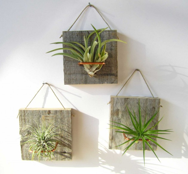 20 creative handmade air plant decorations for Air plant wall art