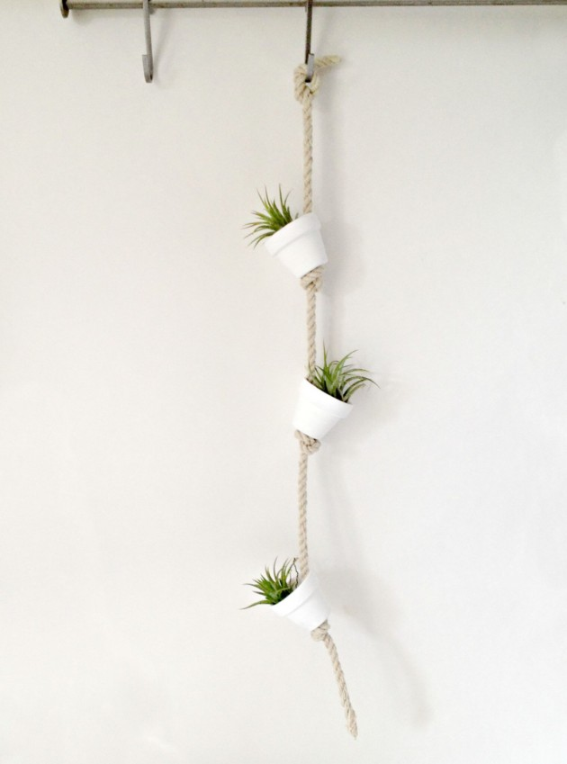 20 Creative Handmade Air Plant Decorations