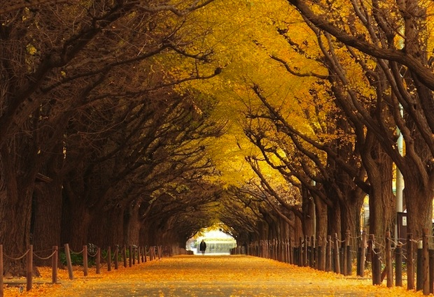 Incredibly Magical Tree Tunnels Worldwide- You Must Walk Through Them