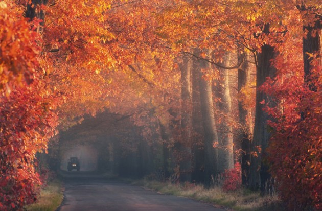 10 Startling Tree Tunnels You Must Walk Through (10)
