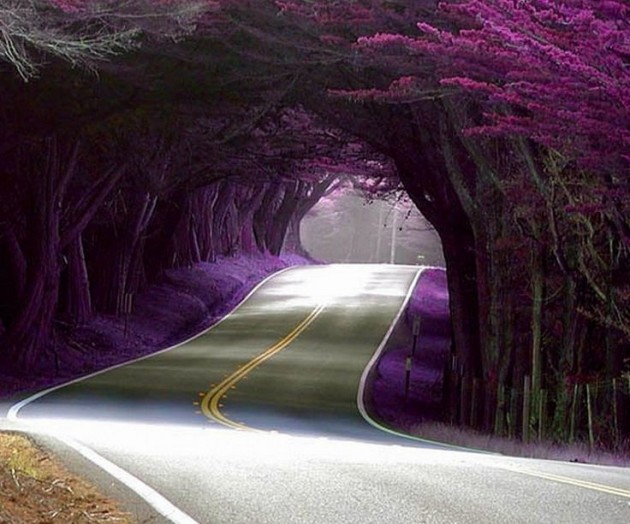 10 Startling Tree Tunnels You Must Walk Through (2)