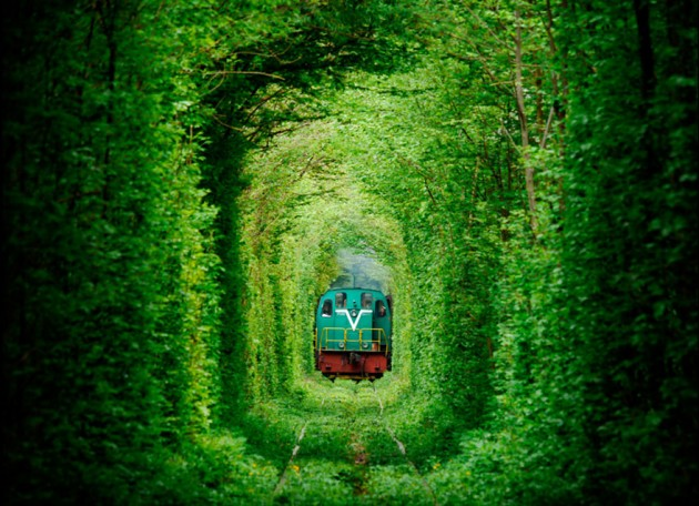 10 Startling Tree Tunnels You Must Walk Through (3)