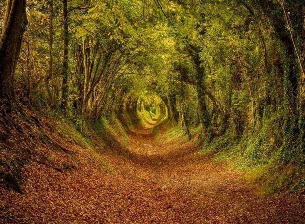 10 Startling Tree Tunnels You Must Walk Through (4)