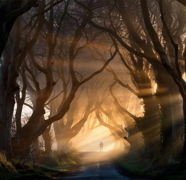 10 Startling Tree Tunnels You Must Walk Through (5)