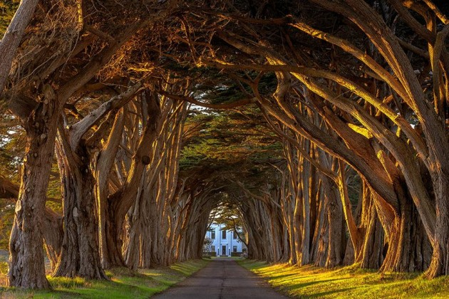 10 Startling Tree Tunnels You Must Walk Through (6)