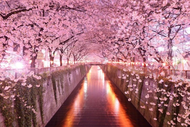 10 Startling Tree Tunnels You Must Walk Through (7)