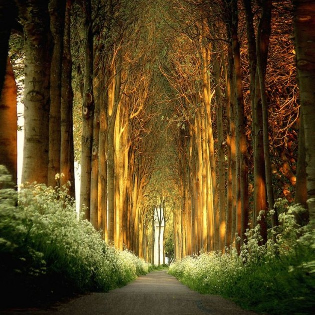 10 Startling Tree Tunnels You Must Walk Through (8)