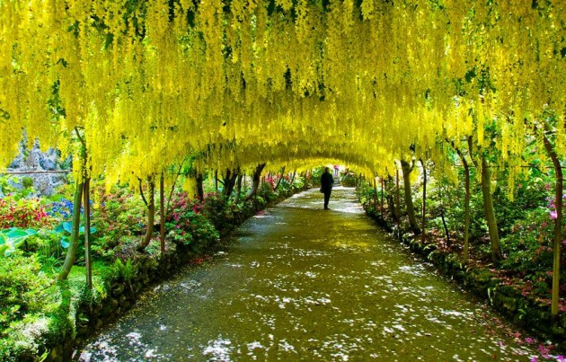 10 Startling Tree Tunnels You Must Walk Through (9)