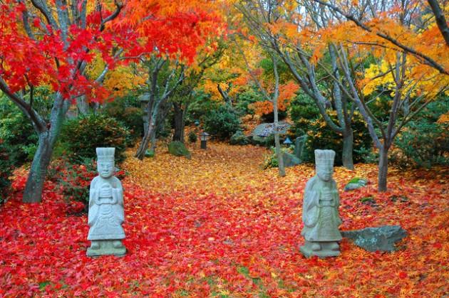 Helpful Tips For Autumn Update of Your Garden