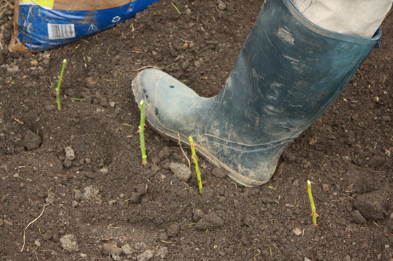 Top 17 Surprisingly Awesome Garden Hacks and Tips That Actually Work