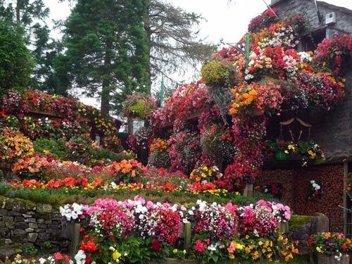 colour-garden-hanging-baskets
