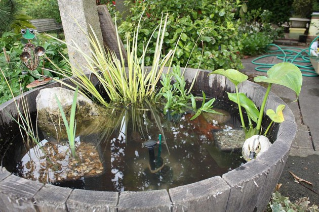15 Charming DIY Mini Garden Pond Ideas
