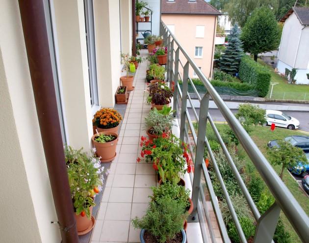 Front Of House Landscape Plans