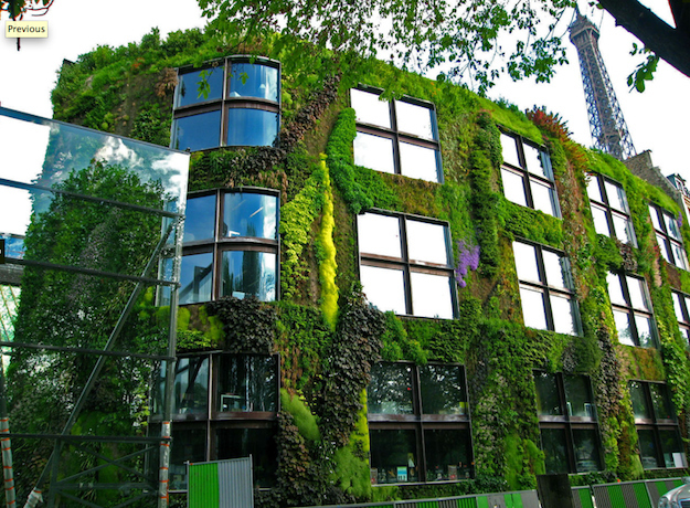 Vertical Gardens Changing Gardening in Small Spaces