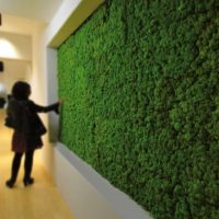 Green Wall Ideas For The Interior And Exterior Of Your Home