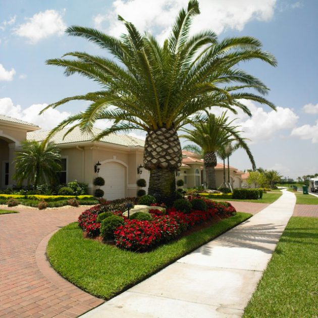 19 Exceptional Ideas To Decorate Your Landscape With Palm ... on Backyard Landscaping Ideas With Palm Trees id=15930