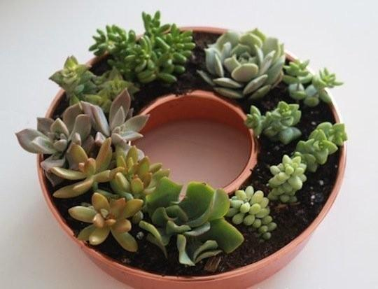 19 Really Amazing Ideas Of Repurposed Succulent Planters