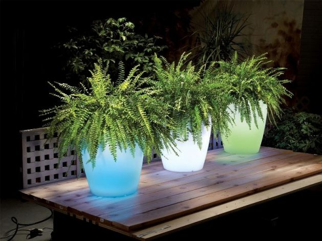 15 Astonishing Illuminated Planter Designs That You Shouldn't Miss