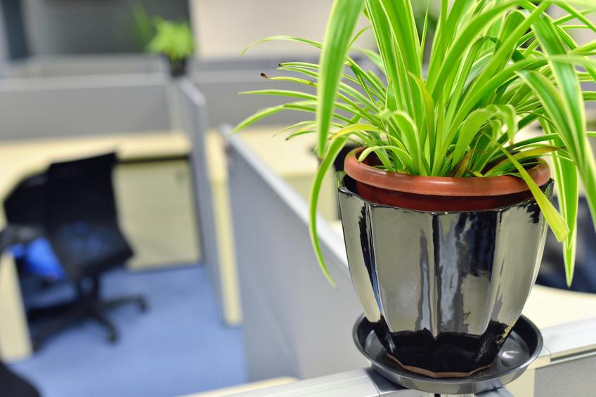 Revitalise Your Office For A Fresh Start