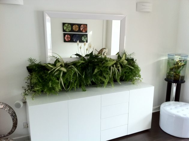 Simple Ways To Revive Your Work Space With Plants