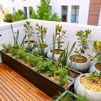 5 Creative Ideas for Small City Gardens