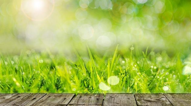 How to Create and Maintain a More Natural Lawn and Garden