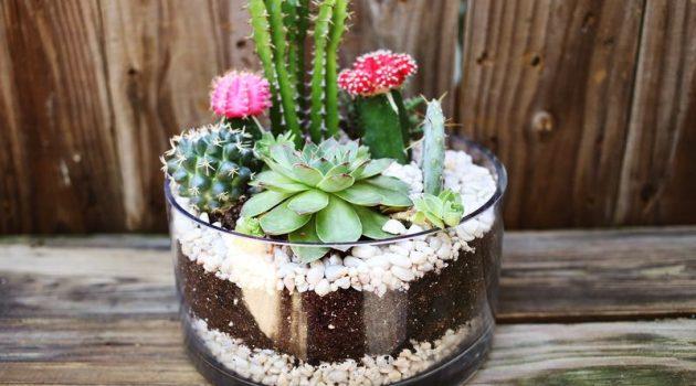 18 Captivating DIY Miniature Gardens To Beautify Your Home