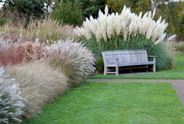 5 Rules for Designing Your Lawn, and 2 Ways to Break Them