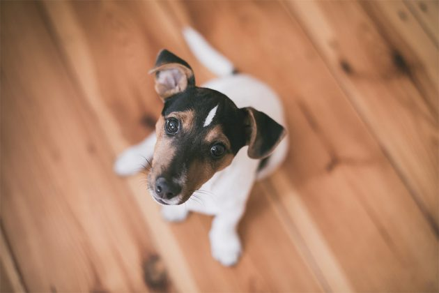 What Is The Best Kitchen Floor For Families With Pets?