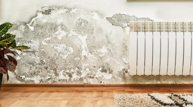 Why Damp in the Home Doesn't Need to be a Cause of Panic