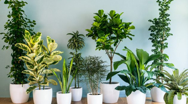 Simple But Efficient Tips For Maintaining Indoor Plants