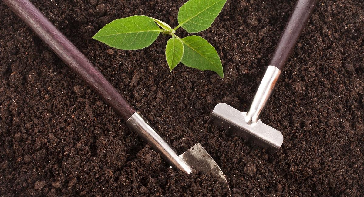 How To Build Fertile, Healthy Garden Soil?