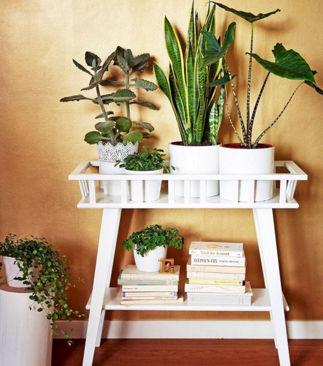 Mini Garden In The Bath- Yes Or No?