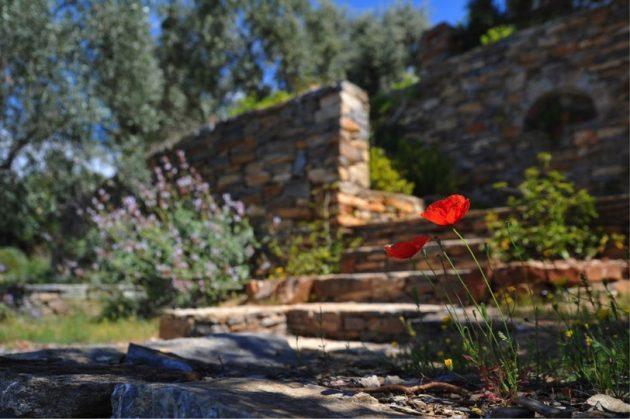 5 Money Saving Tips for Creating an Idyllic Garden Space