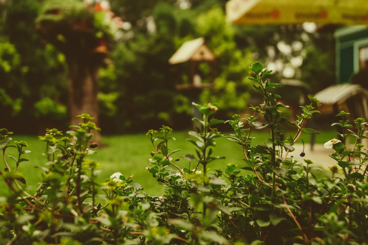 6 Basic Ideas To Beautify Your Yard And Garden