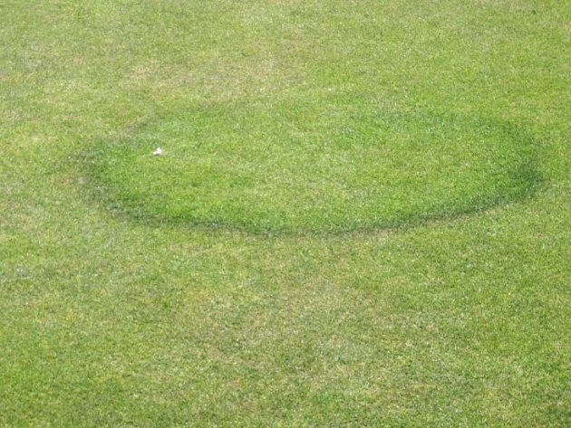 Lawn Language: What Your Turfgrass Is Trying to Tell You
